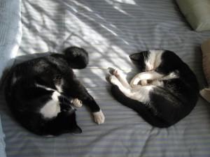ベッドの上でもひなたぼっこ