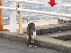 名古屋港の猫
