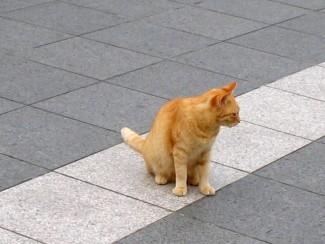 沖縄の猫1