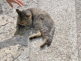 沖縄の猫2