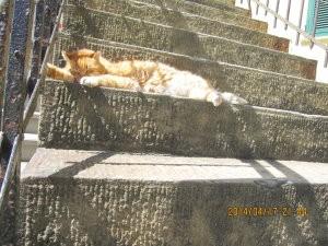 チンクエテッレの猫