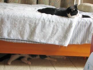 2だんベッド